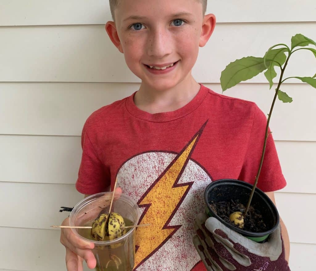 Boy with Avocado Plant