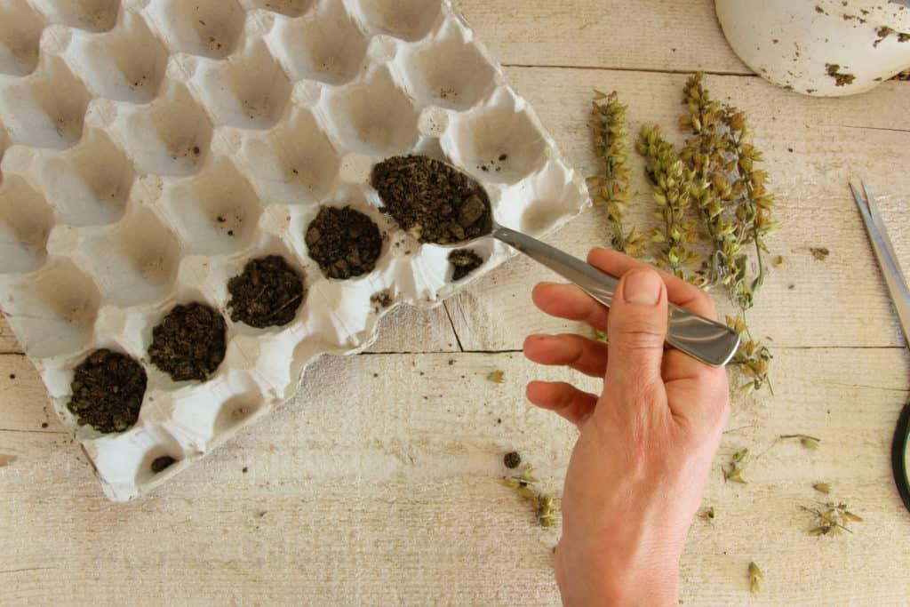 Sporuting Seeds